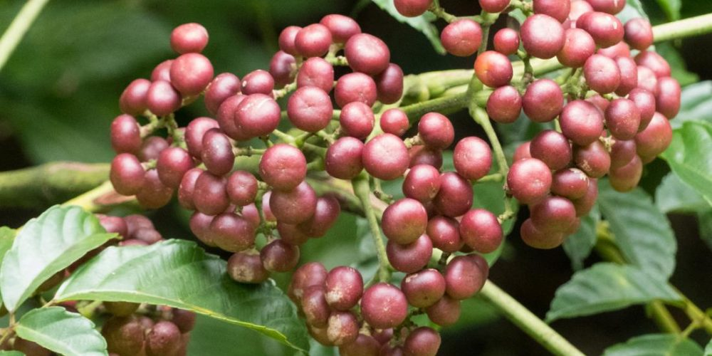 These 5 tropical plants may 'provide anticancer benefits'