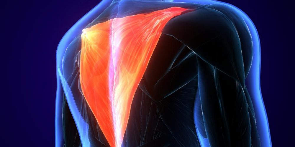 What is the trapezius muscle?