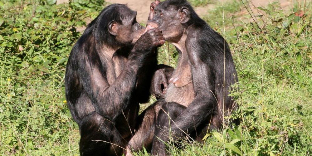 Why do female bonobos have more sex with each other than with males?