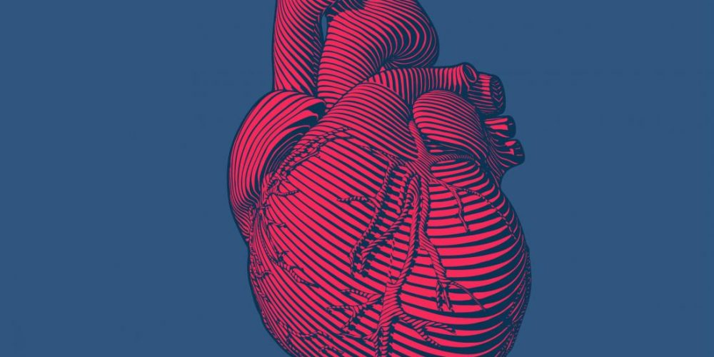 Why your gut may hold the key to cardiovascular health