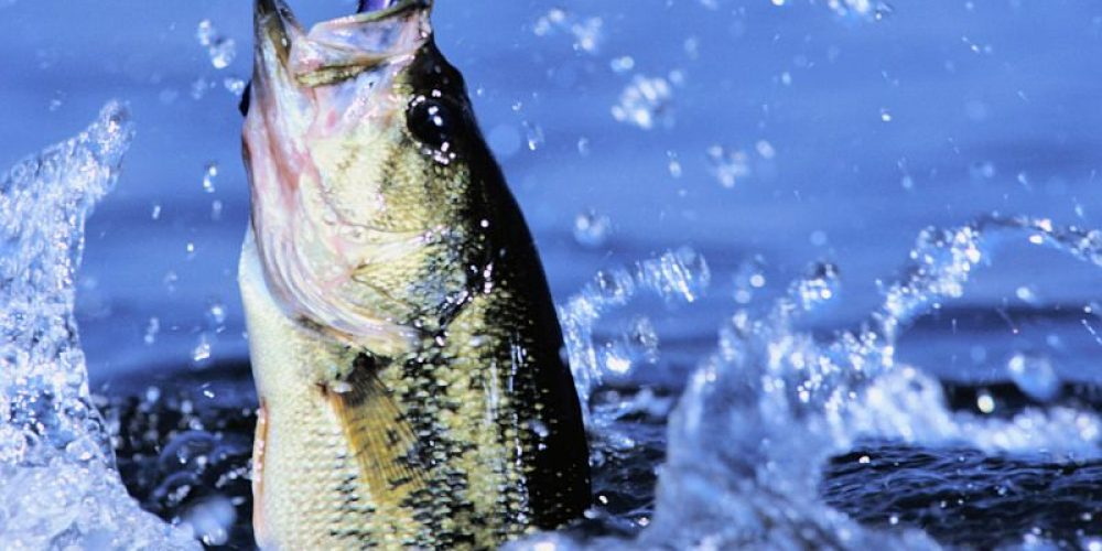 Fish Slime Could Hold Key to Beating 'Superbug' Infections