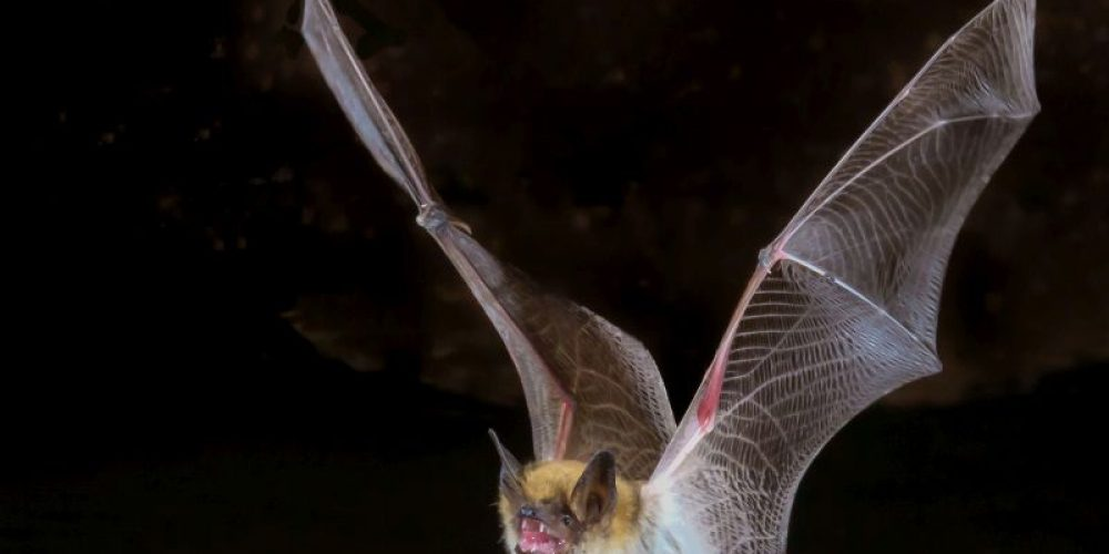 Bats Are Biggest Rabies Danger, CDC Says
