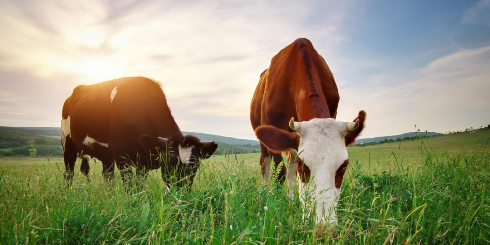 What are the benefits of grass-fed butter?