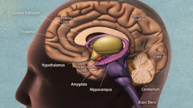Early Warning Signs and Stages of Dementia