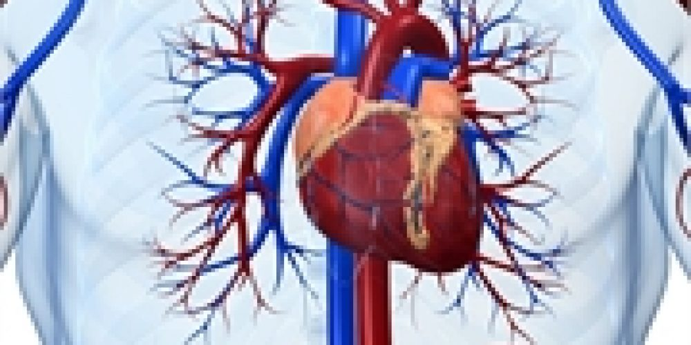 Fasting Diet Could Benefit Heart Health: Study