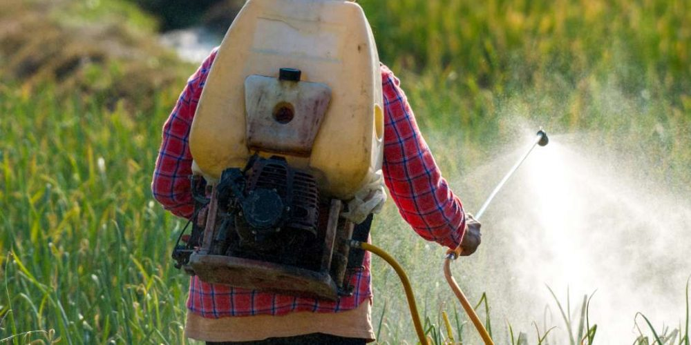 Are pesticides in food harmful?