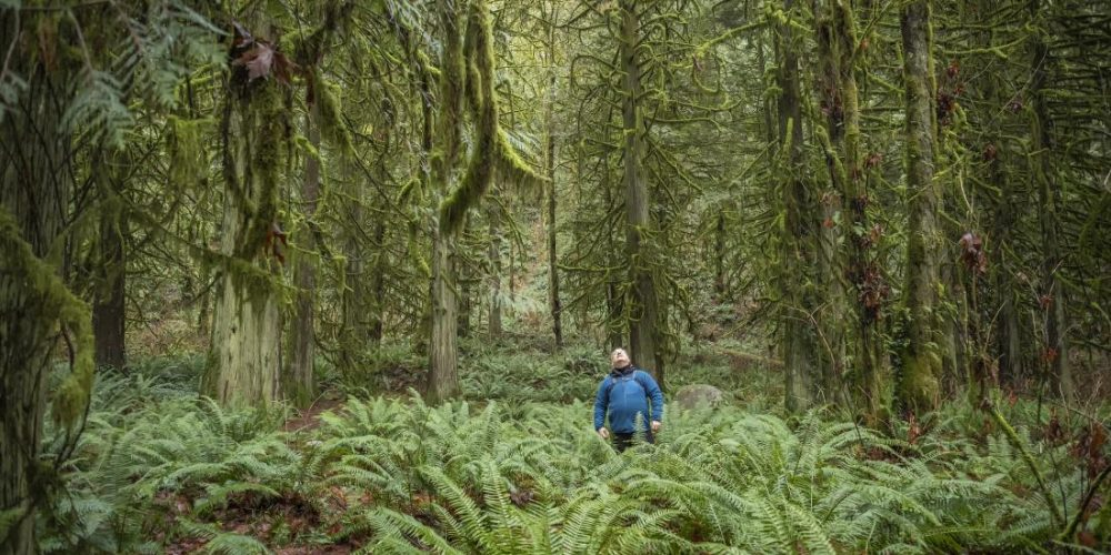 Can 'forest bathing' reduce stress levels?