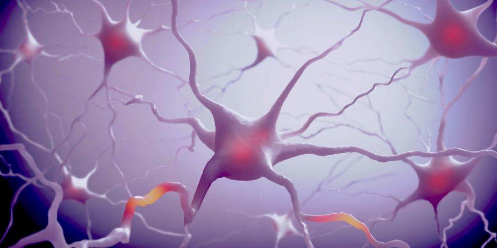 Sleep allows immune cells to do maintenance work on the brain