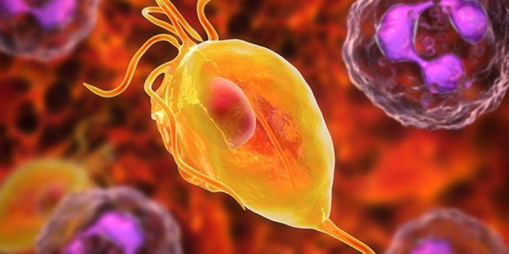 progesterone vaginal gel (Crinone, Endometrin)
