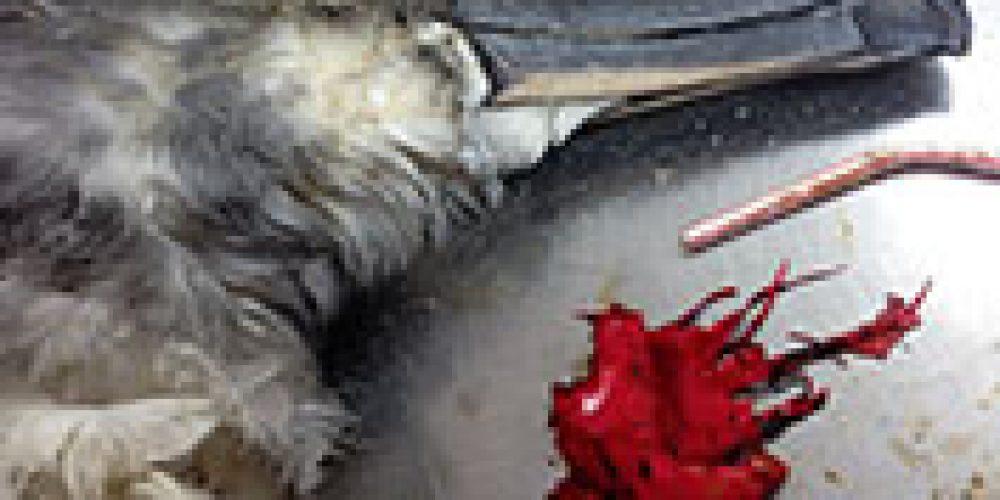 The Deadliest Plastic for Seabirds? Balloons