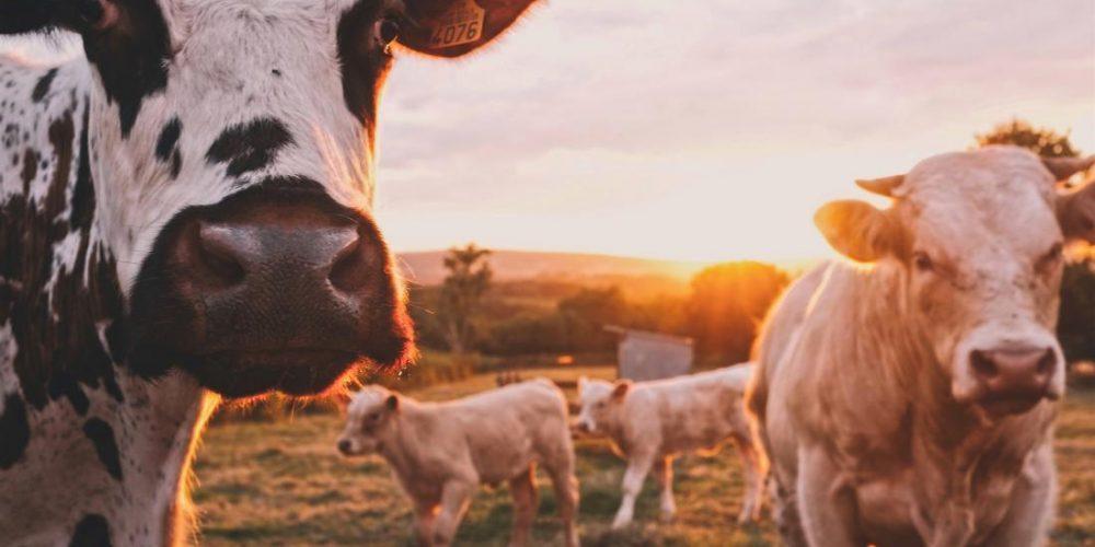 'Antibiotic resistance in farm animals is rising fast'
