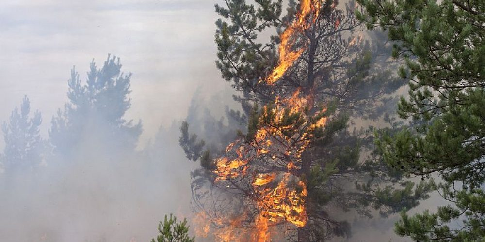 Wildfires Send Kids to ERs for Breathing Problems