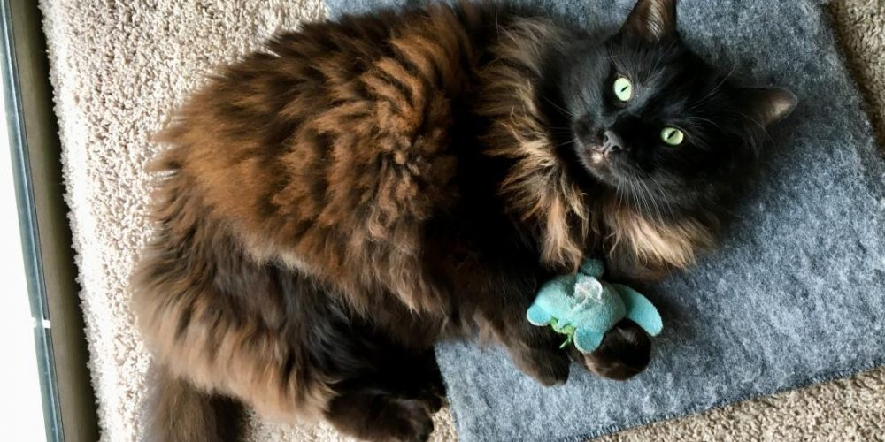 Catnip: What do we know about the feline drug?