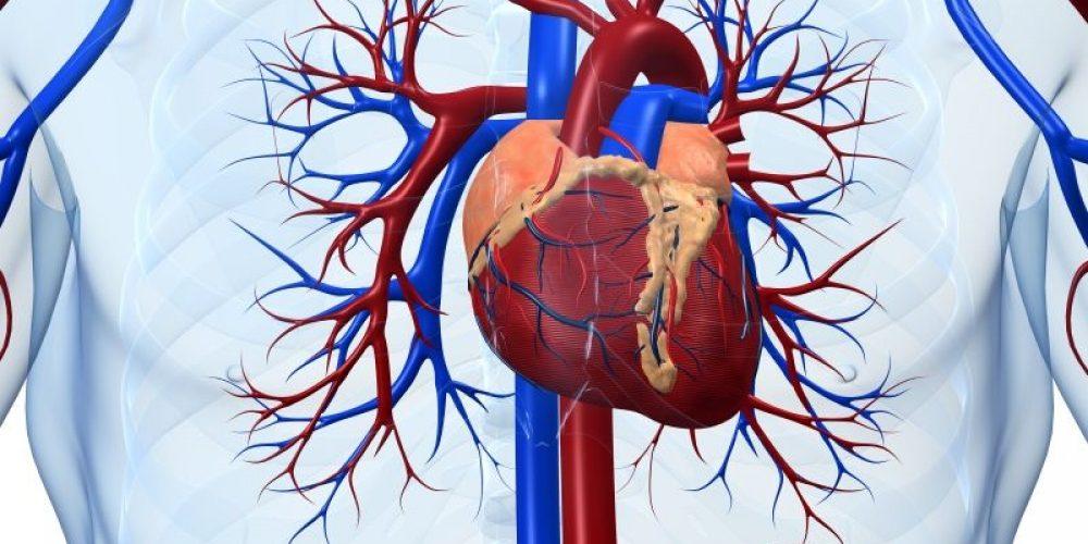 Certain Antibiotics Tied to Deadly Heart Vessel Tears: FDA