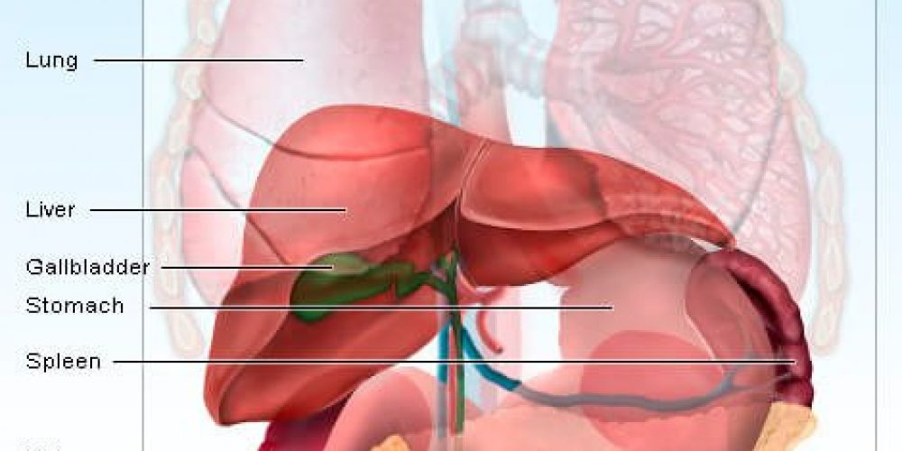 Enlarged Spleen (Splenomegaly) Symptoms, Signs, Causes,Treatment