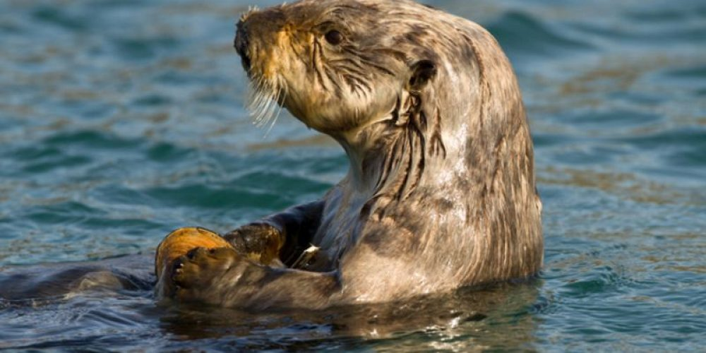 'Microplastics' in Dolphins, Seals Heighten Environmental Concerns