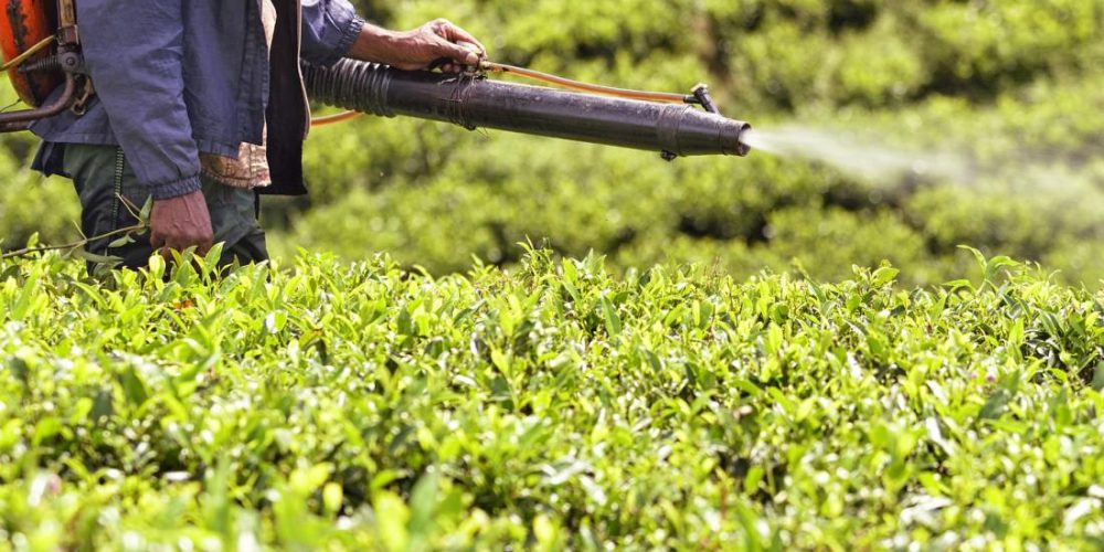 Pesticide may increase autism risk